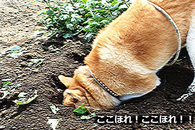"""冬眠前の栄養補給!""""蝶々""""のキャリアを支える「手抜き」レシピ(アイキャチ)"""